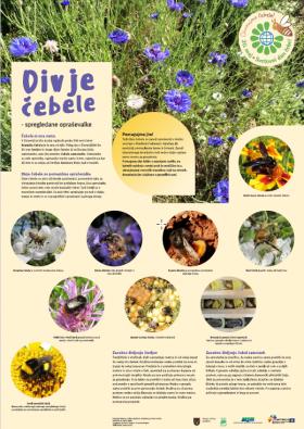 Plakat Divje čebele