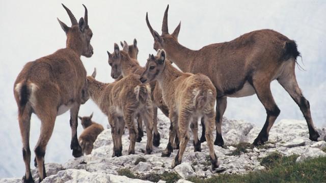 Nova publikacija JZ Triglavskega narodnega parka