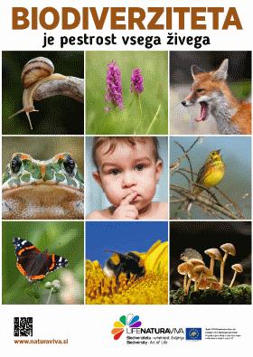 Mestni plakati o biodiverziteti – pri nas