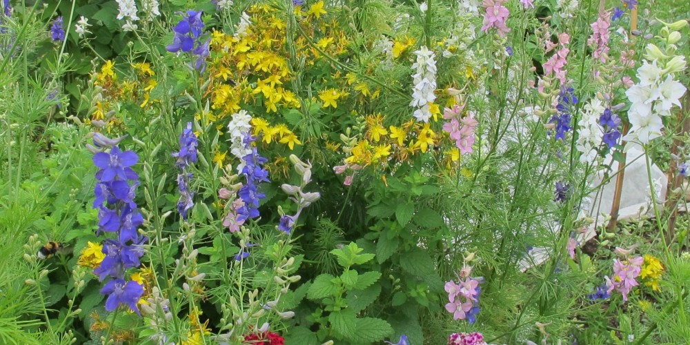 Natečaj »Biodiverziteti najbolj prijazen vrt«