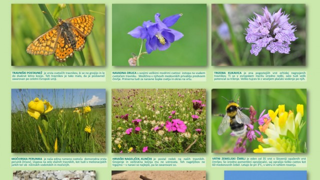 """Novi """"mesečni plakati"""" o biodiverziteti v Kozjanskem parku"""