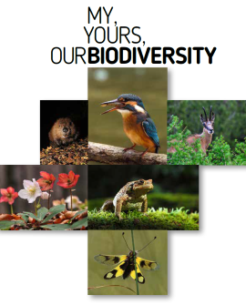 Brošura o biodiverziteti – ANG