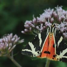 Plakat o biodiverziteti v Kozjanskem parku v juliju