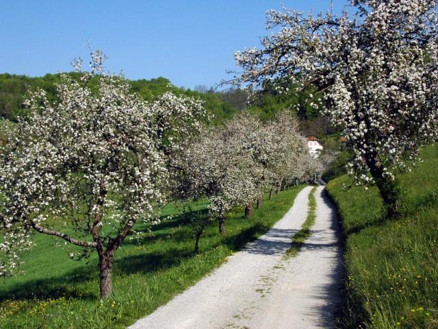 """Praznik kozjanskega jabolka in odprtje """"Grajske poti Podsreda"""""""