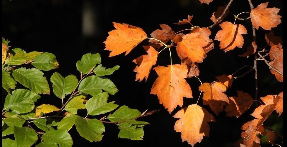 Plakat o naravi Kozjanskega parka za mesec oktober