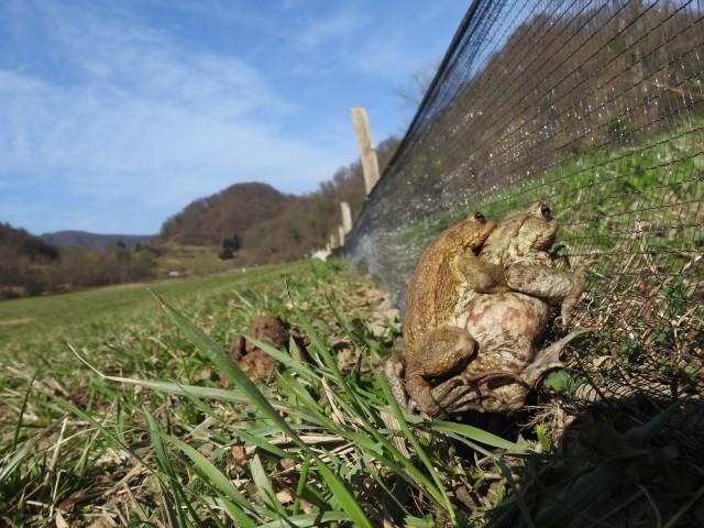 Narava Kozjanskega parka v marcu