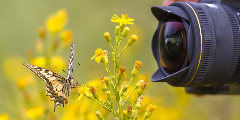 Foto in video natečaj o biodiverziteti za osnovnošolce