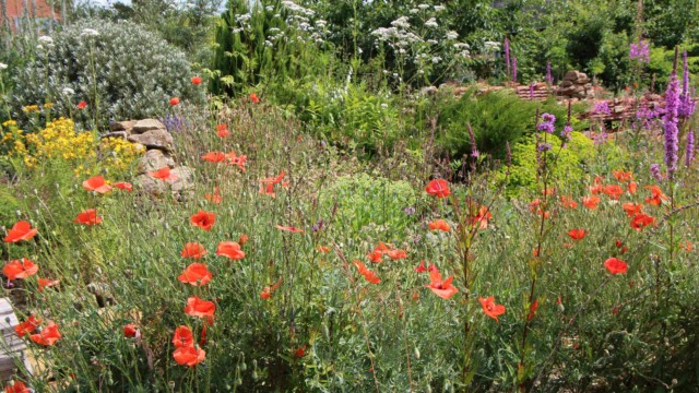 Nasveti za biodiverziteti prijazen vrt