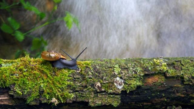 """Fotografski natečaj """"Biodiverziteta – umetnost življenja"""" 2020"""