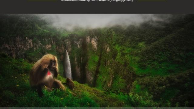 Ob dnevu biodiverzitete razkrivamo zmagovalca natečaja Magična narava 2019