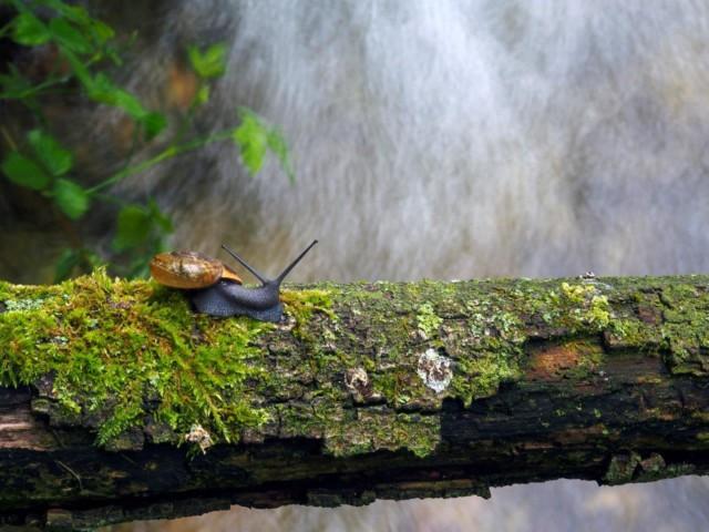 """Fotografski natečaj """"Biodiverziteta – umetnost življenja"""""""