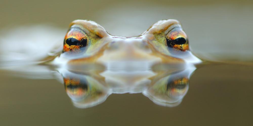Oddaje o naravi in biodiverziteti