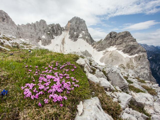 Biotska pestrost v gorah