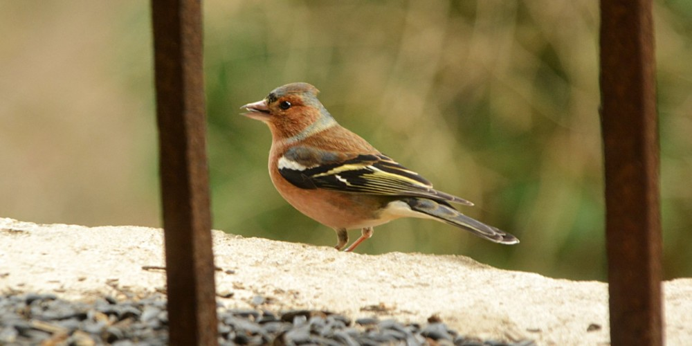Ne pozabimo na ptice pozimi