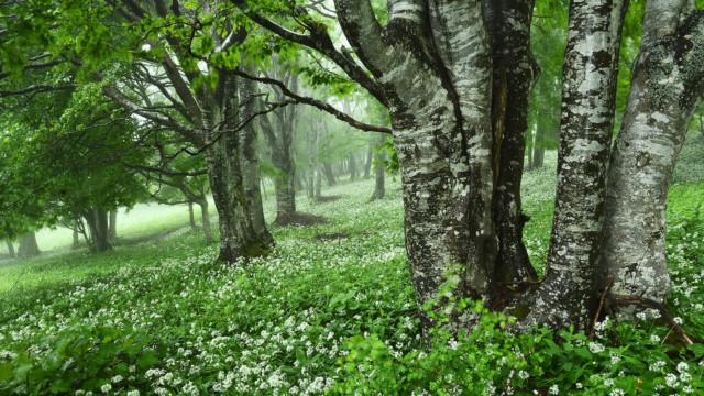 Gozdovi – ohranjajo ljudi in planet