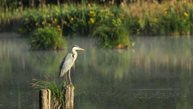 Biodiverziteta in voda