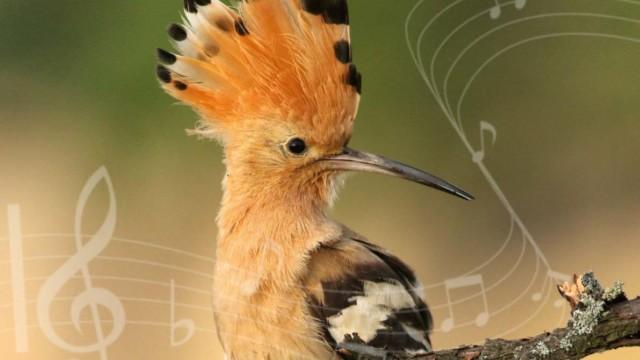 Prisluhnimo naravi in doživimo glasbo
