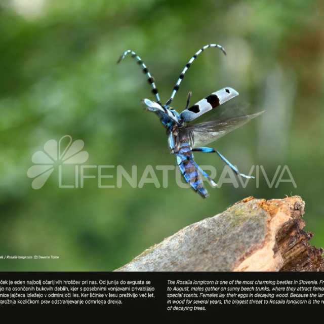 Zunanja razstava Biodiverziteta Slovenija